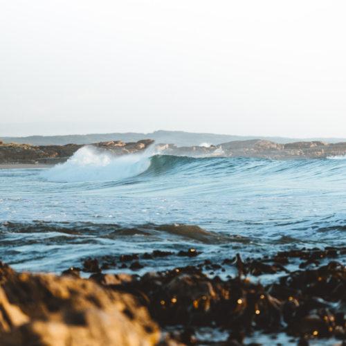 Surf & Skateboard Shop in Tasmania | Red Herring Surf