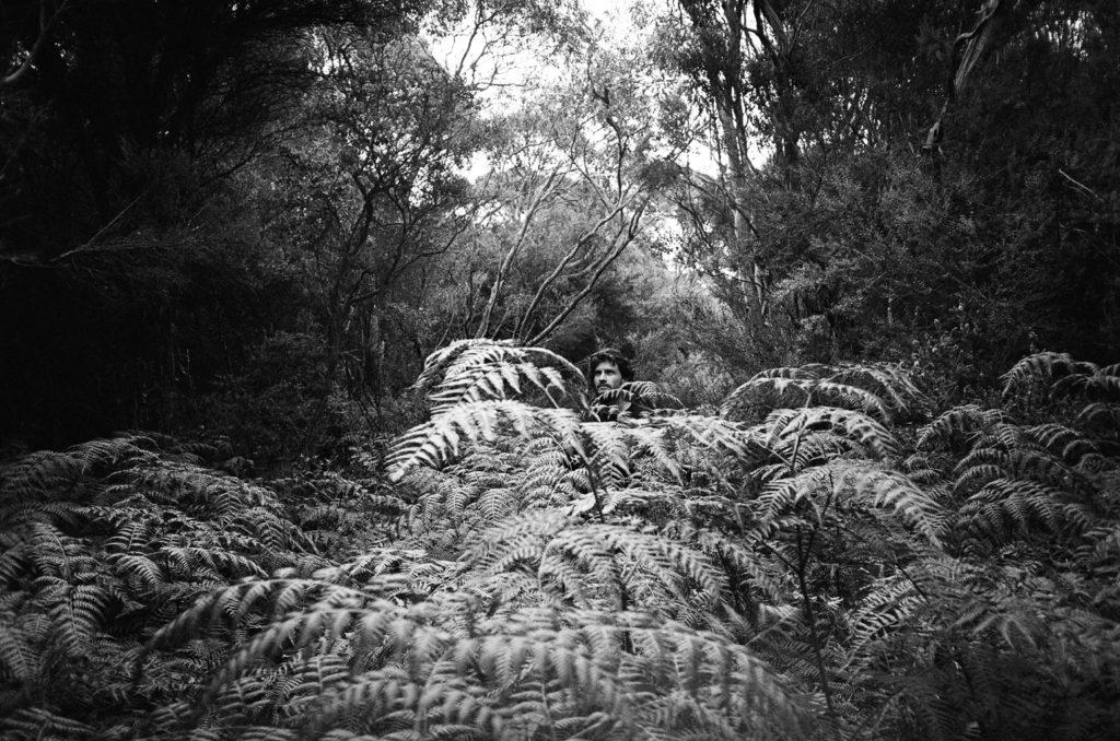 Inside an Australian Rainforest